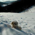 Kar Altında Menekşe Yaylası
